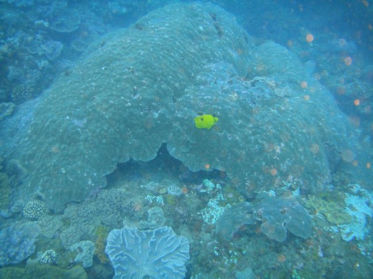 Dive sites (Sodwana): Two Buoy