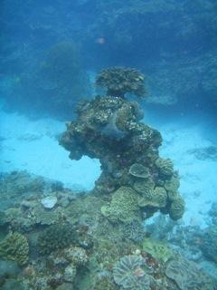 Sodwana reef formation