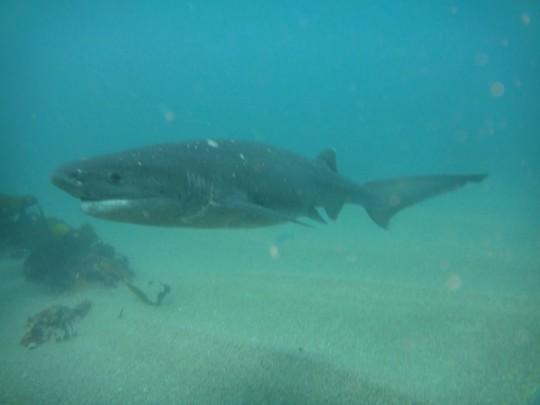 Sharks! MOOC videos (part I)