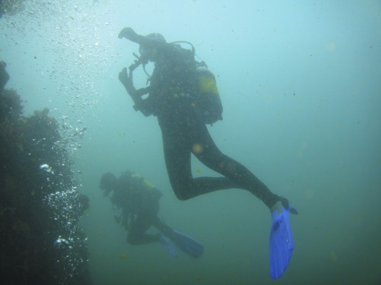 Divers explore a wall