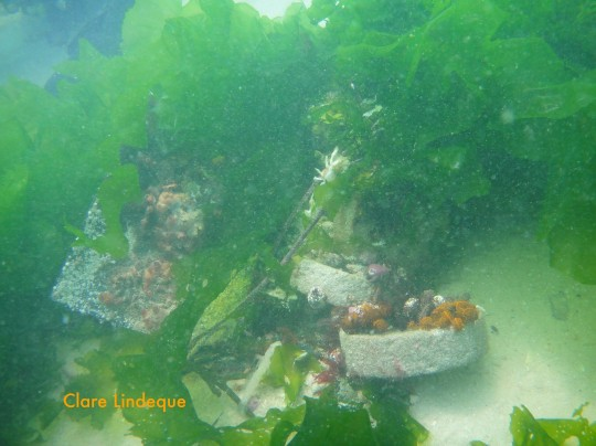 Update on the artificial reef: 4 months