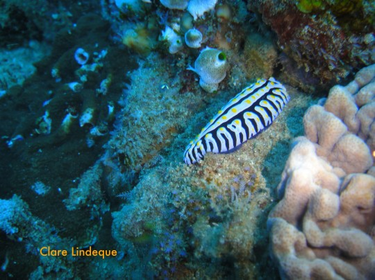 Dive sites (Sodwana): Chain