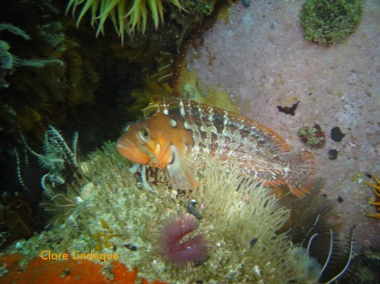 Klipfish outside the swim through