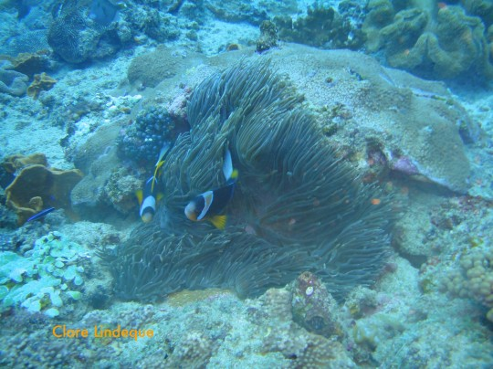 Dive sites (Sodwana): Four Buoy – part 2