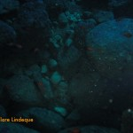 Cardinal fish inside the cave at the bottom of the Blue Hole