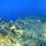 Posodonia and algae in shallow water