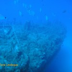 Saddle bream school on the wreck