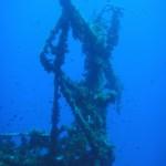 Damselfish swarm around the mast