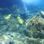 Tony investigating the shallows
