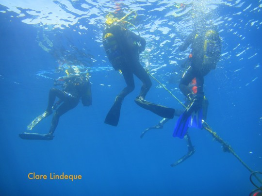 Divers on the surface after dropping into the water