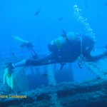 Tony is surrounded by damselfish as he passes over the wreck