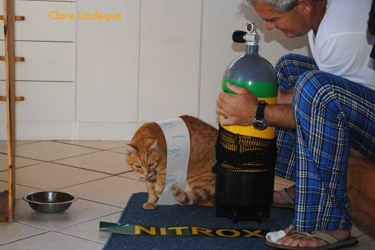 The Number One cat helps me apply a Nitrox sticker to one of my cylinders