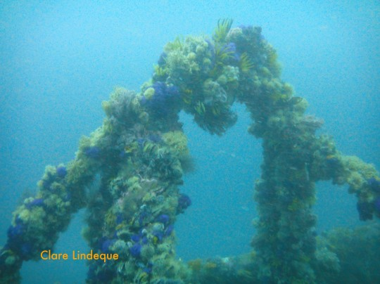 Newsletter: Spring has sprung, and another dive trip is in the making…
