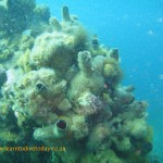 Ascidians in the (shallower) red bait zone