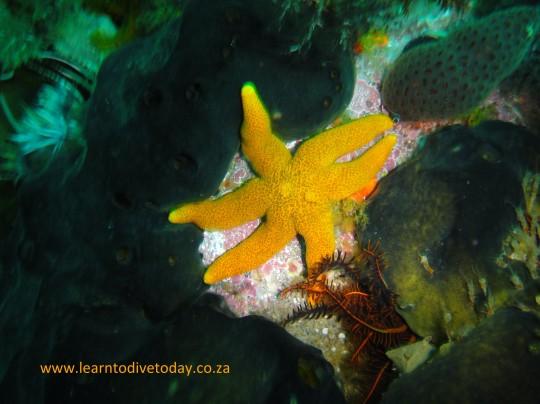 A six-legged granular sea star
