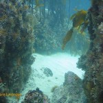 Interesting gaps between the rocks and in the kelp are fun for divers!