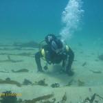 James swims over broken kelp