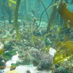 There is abundant life at the foot of the kelp stipes