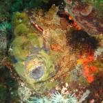A klipfish curls around some redbait