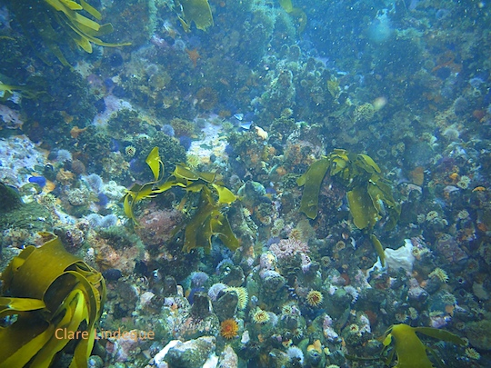 The reef around Seal Rock