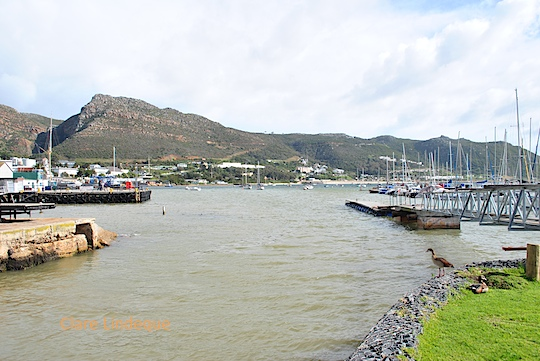 Muddy water at False Bay Yacht Club