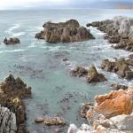 Milky blue water, kelp and orange rocks