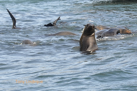 """Curious seal says, """"Are you my mother?"""""""