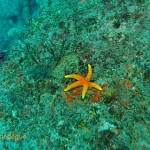 Lonely sea star