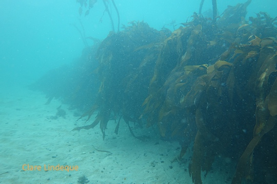 The highest parts of the Brunswick wreck