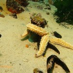 Starfish attached to a bolt