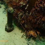 Copper bolt next to a rock lobster