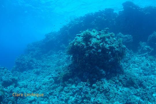Top of Shark Reef