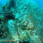 Scorpionfish on the bow