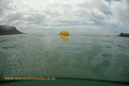 Over-under view of the exclusion net at Fish Hoek
