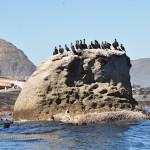 Cormorants near Duiker Island
