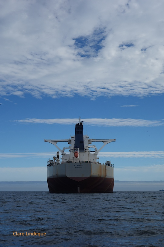 E-Whale on the horizon