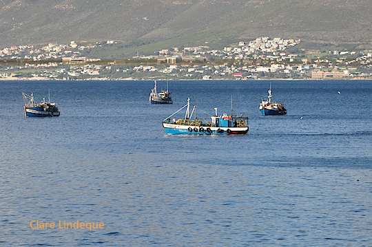 Fishing boats at anchor in Fish Hoek
