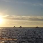 Cage diving boats at Seal Island