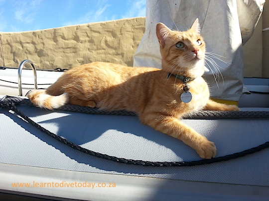 Fudge using the boat for his own purposes