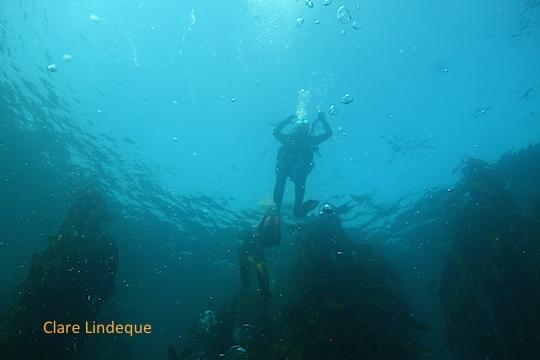 Loryn descending at Duiker Island