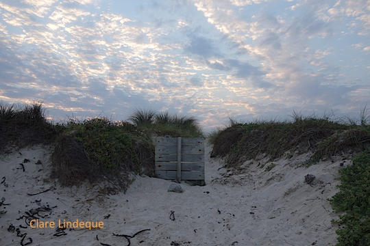 A wooden fence in the dunes