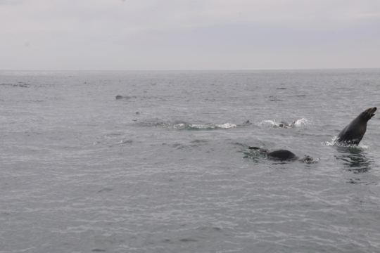 Leaping seals