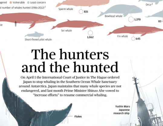 South China Morning Post whaling infographic