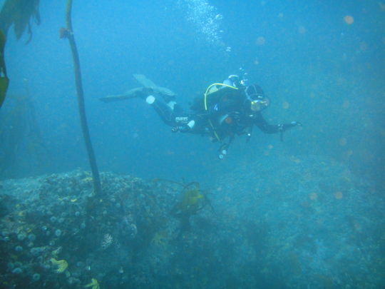 Dive sites: Vulcan Rock