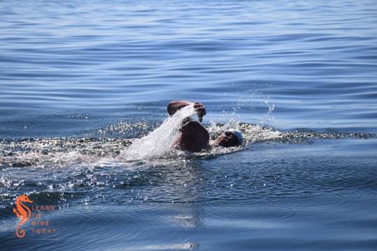 A Day on the Bay: Freedom Swim 2015