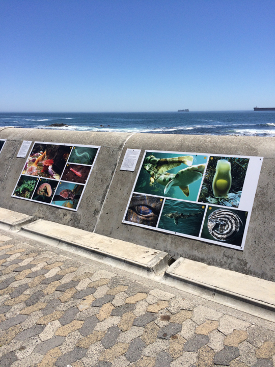 The Sea-Change exhibition in Sea Point