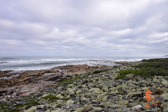 Rockpools abound near Olifantsbos