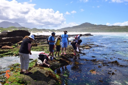 Foraging for edible seaweed