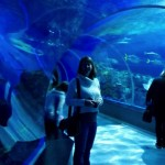 In the tunnel through the Ocean tank