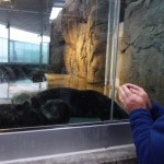 Tony greets the otters